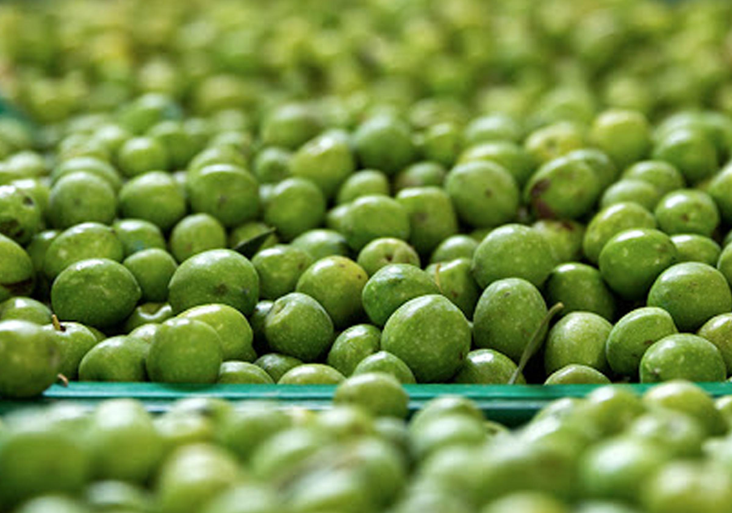 Quanto fanno bene le olive alla salute?